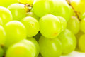 Green grape bunches of grapes isolated over white background Stock Photography