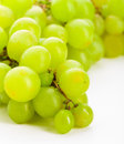 Green grape bunches of grapes over white background Stock Photos