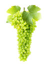 Green grape isolated on the white background Royalty Free Stock Photo