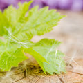Green grape leaf with little dandelion seeds Royalty Free Stock Photo