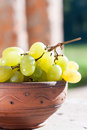 Green grapes in a bowl in the sunlight Stock Image