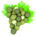 Green grapes with green leaves detailed Stock Images
