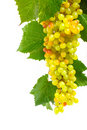 Green grapes with leaves Stock Images