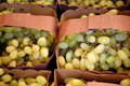 Green Grapes for Sale Royalty Free Stock Photo