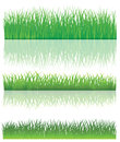 The Green Grass. Royalty Free Stock Photo