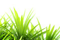 Green grass Stock Photos