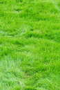 The green grass Stock Image