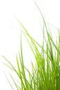 Verde hierba
