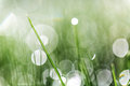 Green grass abstraction Royalty Free Stock Photo