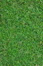 Green grass area covered with in sunny day Royalty Free Stock Images
