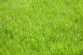 Green grass artificial field top view texture Stock Image