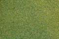 Green grass artificial turf in the garden Stock Image
