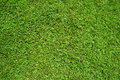 Green grass as background and texture image of Royalty Free Stock Images