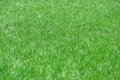 Green grass background of a Stock Photography