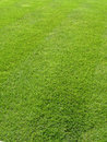 Green Grass Background 4 Stock Photography