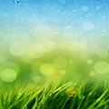 Green grass background abstract with and a blue sky above Royalty Free Stock Image