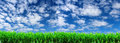 green grass on a background of blue sky with white clouds. Royalty Free Stock Photo