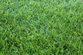 Green grass background closeup photo of grassy cover Stock Photography