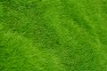 Green grass background of closeup shot on Royalty Free Stock Photos