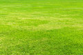 Green grass background a lush Royalty Free Stock Photo