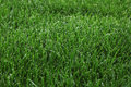 Green grass background of lush cut Stock Photography