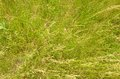 Green grass background. Royalty Free Stock Photo