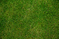 Green grass background nature from above Royalty Free Stock Photo