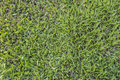 Green Grass Background Textur