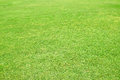 Green grass background and texture Royalty Free Stock Photography