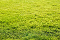 Green grass background texture. Beautiful bright green field. Royalty Free Stock Photo