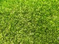 Green grass background texture detail of Stock Images