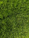 Green grass background texture. Golf or football field. Background and texture of green grass pattern from golf course Royalty Free Stock Photo