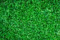 Green grass background texture. Green lawn texture background. Royalty Free Stock Photo