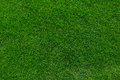 Green grass background texture natural Royalty Free Stock Image