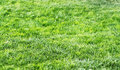 Green Grass Background Texture At Sunset
