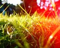 Green grass background, toned bright grass closeup view with sun halo lens flare Royalty Free Stock Photo