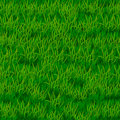 Green grass background vector illustration Royalty Free Stock Photography