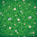 Green grass background vector illustration of with cute flowers Stock Photo