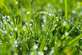 Green grass background with water drops Royalty Free Stock Photography