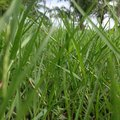 Green grass beautiful Royalty Free Stock Photos