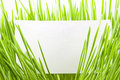 Green grass with blank business card Royalty Free Stock Photo