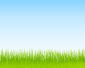 Green grass and blue sky background. Spring nature background Royalty Free Stock Photo
