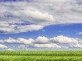 Green grass and blue sky an with clouds for background Stock Photo