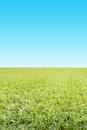 Green grass and blue sky in foreground with graduated in the background Royalty Free Stock Image