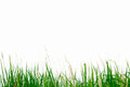 Green grass breeze on a white background Royalty Free Stock Photo