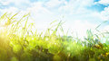 Green grass and bright sun blue sky with clouds in the sunlight Royalty Free Stock Images