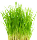 Green grass  bush Royalty Free Stock Photos