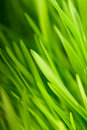 Green grass close up as a bacgkround Stock Image