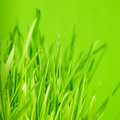Green grass close up as a bacgkround Stock Photos