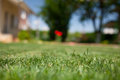 Green grass close up in the backyard Royalty Free Stock Photography